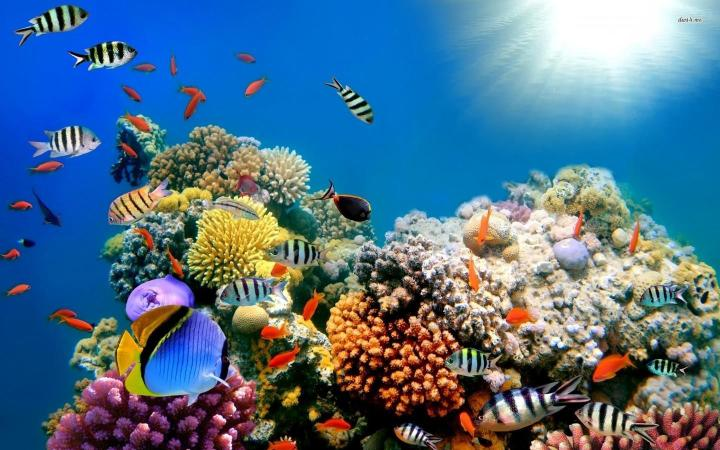 27073454-underwater-world-wallpapers